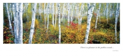 Birch Grove In Autumn - 3 section Panoramic card