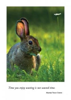 Hare with Daisy