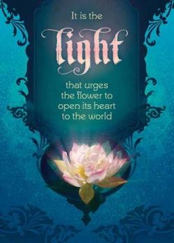 Bouquet of Light