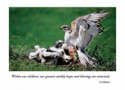 Hawk on Nest