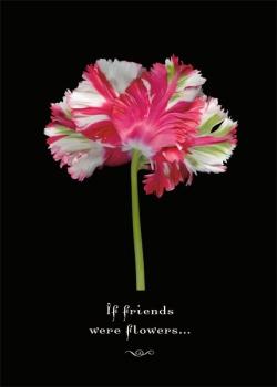 If Friends ..