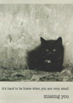Urban Kittens