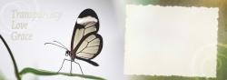 1530202539_henge-7x5-cards-v3-visantics-page-18.jpg