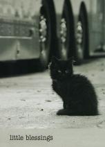 SALE Kittens